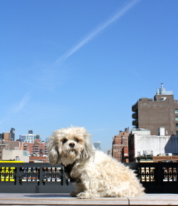 dog friendly hotels in nyc