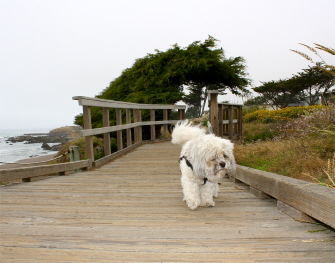 dogfriendly hotels in California
